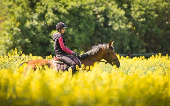 Pension pour chevaux à Forges-les-Eaux